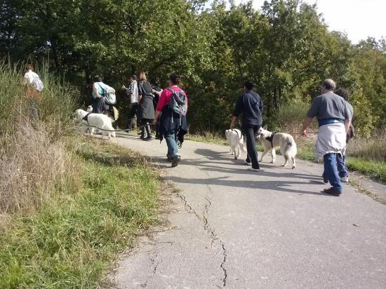 Gestion des chiens en laisse ou longe