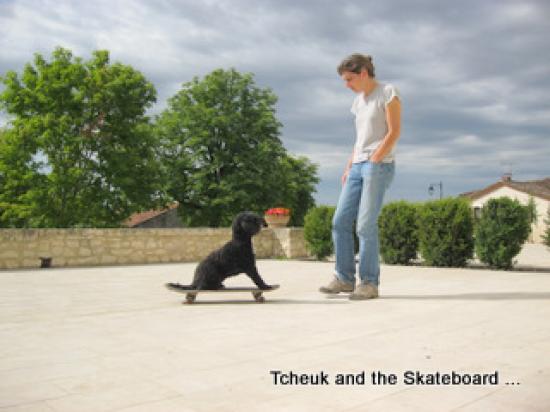Dog Skateboard !