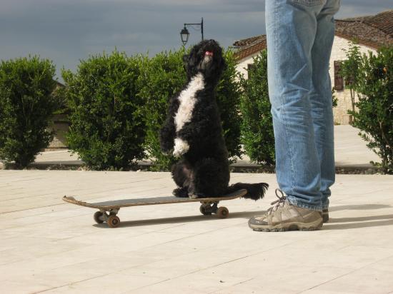Le beau en Skate ...